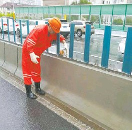 ??  ?? A worker picks up a kitten on an elevated road on August 12 last year, the day that Typhoon Yagi hit. — Ti Gong