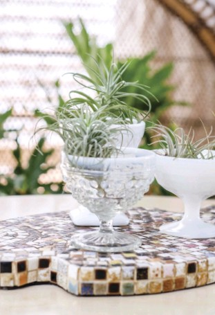 ??  ?? above: CREATE A DELIGHTFULVIGNETTE with several air plants atop a mosaic surface. Chi's eclectic goblet planters pair well with the varicolored tiles beneath.
