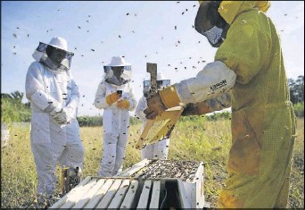 ??  ?? Participants in Round Rock Honey classes will get to look inside a beehive under the guidance of an instructor.