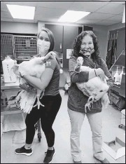 ?? RICHMOND ANIMAL CARE AND CONTROL ?? Richmond Animal Care and Control staffwrangled two turkeys found roosting at a park in South Richmond. The birds have been successfully adopted— and pardoned frombecoming Thanksgiving dinner.