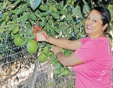 ??   Supplied ?? TASHNEE Maharaj in her garden in Trenance Park.