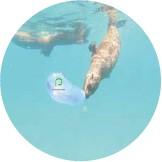 ?? PICTURE: PLETT SEAL ADVENTURES ??