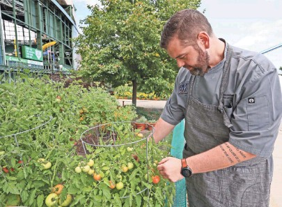 ?? MICHAEL SEARS / MILWAUKEE JOURNAL SENTINEL ?? Seth VanderLaan, executive chef at Miller Park for the Milwaukee Brewers, looks over his garden next to the stadium to check its progress. He harvests items from it for food he prepares, such as these brandywine tomatoes he is growing.