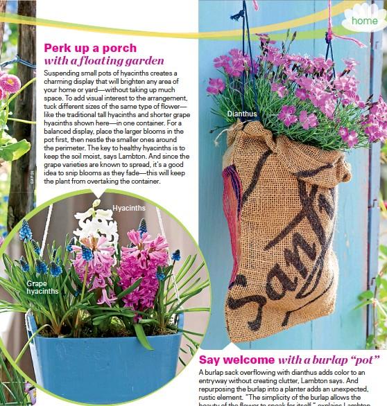??  ?? Grape hyacinthsHyacinthsDianthus