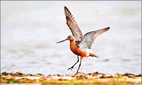 ?? ENVIRONMENT MINISTRY ?? The Ministry of Environment has designated May 10 as the date to observe World Migratory Bird Day each year to raise awareness about the conservation of migratory birds and their habitats.