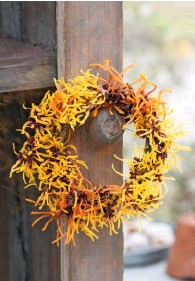 ??  ?? Sprigs of dark ivy leaves and bright winter aconites in glass pots are hung from a gate to welcome those passing through. Shades of yellow and gold are interwoven in this outdoor wreath of tangled witch hazel, Hamamelis x intermedia 'Arnold Promise' and 'Aphrodite'.