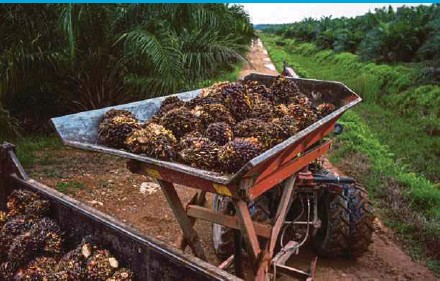 ?? BLOOMBERG PIC ?? Sime Darby Plantation Bhd is the world's largest oil palm plantation company by planted area.