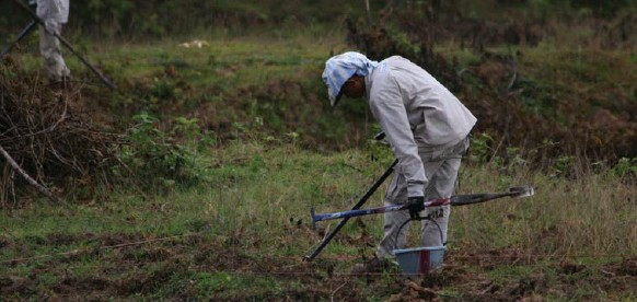 ?? DANIEL OTIS PHOTOS FOR THE TORONTO STAR ?? Handicap International deminers clear a fallow field in Laos's Xepon district. More than 30 cluster bomb submunitions were found at the site.