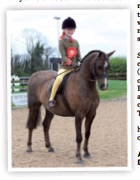 ??  ?? Annandale Toy Soldier (Florence Davies) is top novice hunter pony