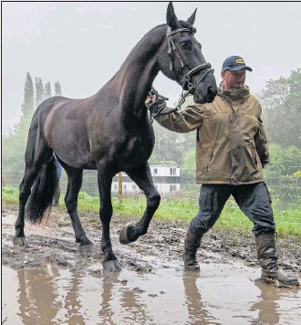 ??  ?? A horse is led through mud in a car park at the drenched Royal Windsor Show yesterday