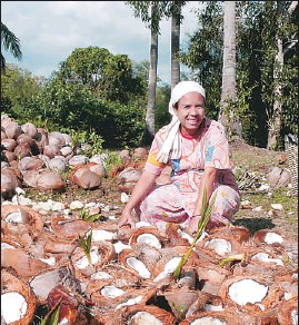 ?? JEFF DIETRICH/ CNS ?? Organic material such as these coconut husks is shredded and turned into mulch and compost instead of being burned.