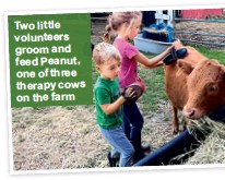 ??  ?? Tw o l it tl e vol­un­teers groom and feed Peanut, one of three ther­apy cows on the farm