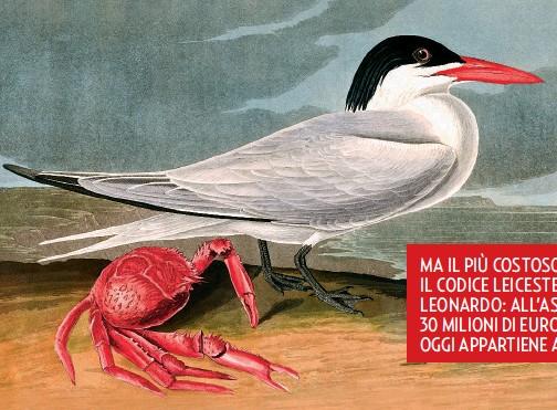 ??  ?? LA STERNA E LA SUA PREDA La Sterna Maxima, o Sterna Reale, è un uccello marino diffuso nelle coste nord americane sabbiose o ghiaiose che si nutre di pesci e crostacei. Qui è stato ritratto da Audubon a fianco di un granchio color carminio. Da notare le diverse tonalità di rosso, colore molto amato dall'autore.
