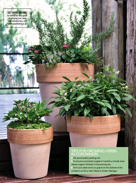 Pressreader South African Garden And Home 2019 01 Tips For Growing Herbs In Containers