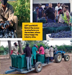 ??  ?? LEFT and RIGHT: Behind the scenes on wine farms are the workers, whose labour keeps the industry alive.