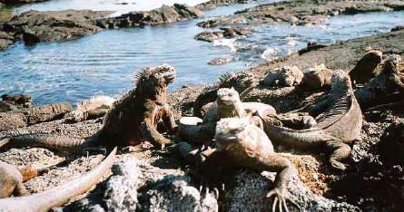 ?? ADN ?? La propuesta presentada al Gobierno busca ampliar el área protegida de 133.000 kilómetros cuadrados a 445.000 en Galápagos.