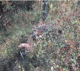?? FOTO: ALEX PÉREZ ?? El cuerpo sin vida de Joel Ochoa fue hallado en medio de matorrales.