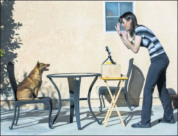 ?? TERRY PIERSON — STAFF PHOTOGRAPHER ?? Riverside Unified School District kindergarten teacher Jessie Bekkedahl helps her dog, Professor Ginger, count to three as she records a math lesson last month for online classes at Emerson Elementary School.