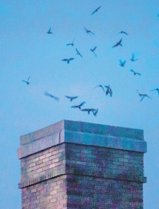 ?? LARRY SNYDER/CONTRIBUTED PHOTO ?? A flock of chimney swifts use the chimney at the former Masonic Temple in Bethlehem as a stop along their fall migration route.