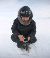 ?? Dr. Trevor Bell photo ?? Andrew Arreak of SmartICE working in the field in The Arctic.
