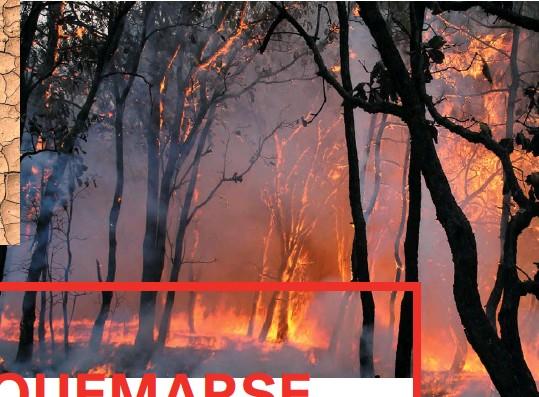 ??  ?? BOSQUE LA PRIMAVERA, JALISCO Para que un incendio forestal se detone basta con tener material combustible vegetal seco y una chispa.