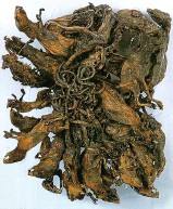 ??  ?? Mystery: The mummified rat king of 32 beasts in a museum in Altenburg