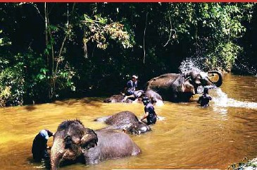 ?? PIX FROM THE NATIONAL ELEPHANT CONSERVATI­ON CENTRE'S FACEBOOK PAGE ?? Mahouts bathing elephants at the National Elephant Conservati­on Centre in Kuala Gandah, Pahang.