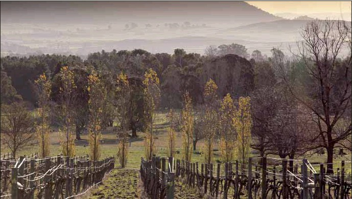 ??  ?? MOUTH WATERING: Award-winning wines to whet your appetite at Ros Ritchie Wines.