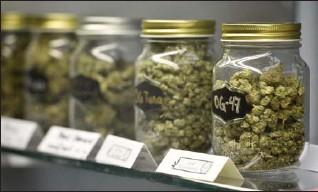 ?? JOHN RENNISON, THE HAMILTON SPECTATOR ?? Some of the marijuana varieties Pacifico Life has in stock.