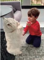 ??  ?? Em geral, Westies se dão bem com crianças, são brincalhões e muito apegados a elas