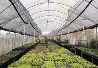 ??  ?? The spacious plant nursery at the Costales Nature Farms where different varieties of vegetables are being grown.