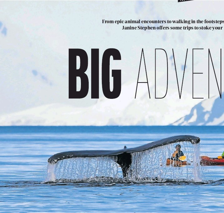 """?? Picture: 123rf.com/cicloco ?? TALL TAIL A humpback whale says """"hi"""" to some visitors off the Antarctic Peninsula, the northernmost part of the mainland of Antarctica."""