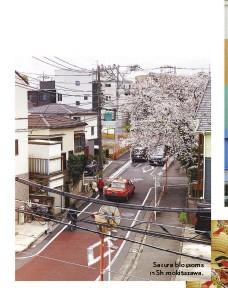 ??  ?? Sakura blossoms in Shimokitazawa.