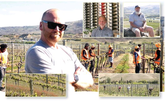 ?? PHOTOS: JARED MORGAN ?? Innovate . . . (clockwise from main) Viticultura viticulturist and operations manager Timbo Deaker with a team of NiVanuatu workers; Misha's Vineyard director Andy Wilkinson; Akarua viticulturist Mark Naismith; vineyard workers tend vines between Pisa and Bendigo the Cromwell Basin; a vinecovered hillside at Pisa.