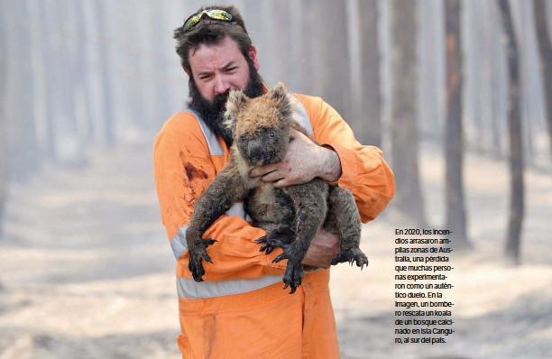 ??  ?? En 2020, los incendios arrasaron amplias zonas de Australia, una pérdida que muchas personas experimentaron como un auténtico duelo. En la imagen, un bombero rescata un koala de un bosque calcinado en isla Canguro, al sur del país.