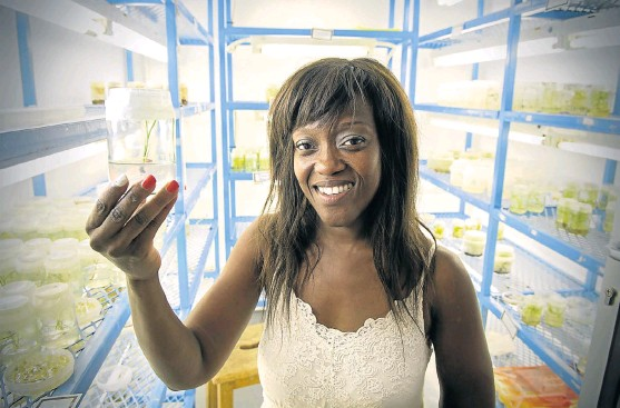 ?? /Trevor Sam­son ?? Root causes: Nox Makunga, an as­so­ciate pro­fes­sor in medic­i­nal plant biotech­nol­ogy, says more role mod­els and greater pub­lic vis­i­bil­ity are needed to en­cour­age African women to study science.