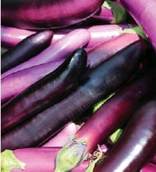 ??  ?? Asian eggplant harvested at the Vineland Research and Innovation Centre.