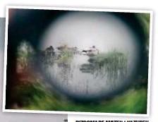 ??  ?? INZOOMADE MÖTEN I NATUREN. Här är det en gräsandshane i kikarsiktet.