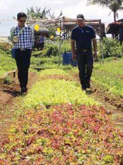 ??  ?? ABC president Michael Caballes (left) and ABC area sales manager Rodolfo Dean inspect the different varieties of lettuce grown at the Costales Nature Farms using Condor Seeds.