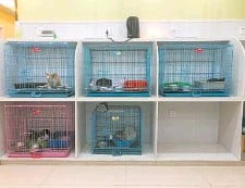 ??  ?? Above: Stray cats in Ruipeng Pet Hospital in Xuhui District — All photos by Xu Lingchao