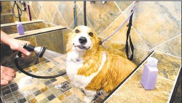 Pressreader The Star Democrat 2016 08 26 Pet Valu Dog Wash To