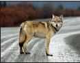 ??  ?? Keeping deer off the roads