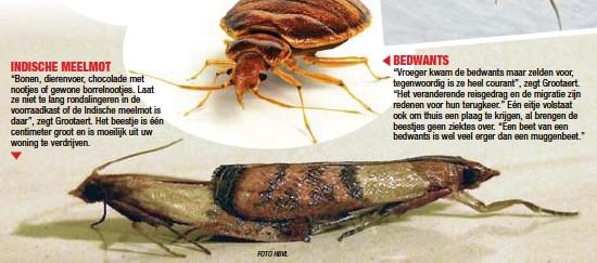 Er Zitten Liefst 100 Soorten Insecten In Onze Huizen Pressreader