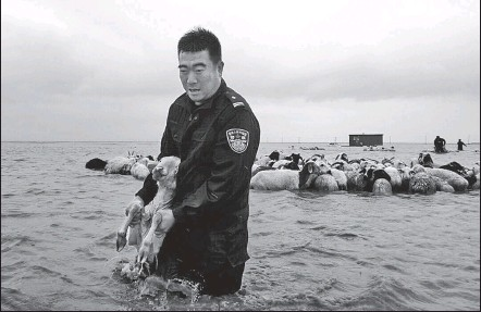 ?? JIANG TONG / FOR CHINA DAILY ?? A herd of sheep trapped by floodwaters in Hulunbuir, Inner Mongolia autonomous region, is rescued by police officers on Sunday. Flooding caused by heavy rain has affected more than 16,000 people and over 21,000 hectares of farmland in Inner Mongolia.