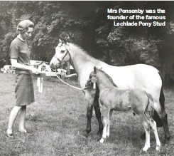 ??  ?? Mrs Ponsonby was the founder of the famous Lechlade Pony Stud