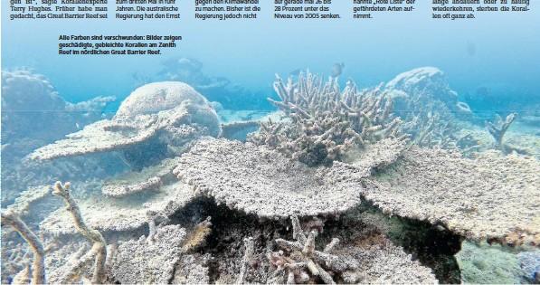 ??  ?? Alle Farben sind verschwunden: Bilder zeigen geschädigte, gebleichte Korallen am Zenith Reef im nördlichen Great Barrier Reef.
