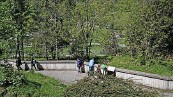 ??  ?? Zu viele Bäume, zu wenig übersichtlich: Fürs Murmeltiergehege sieht der Schweizer Tierschutz einiges Verbesserungspotenzial.