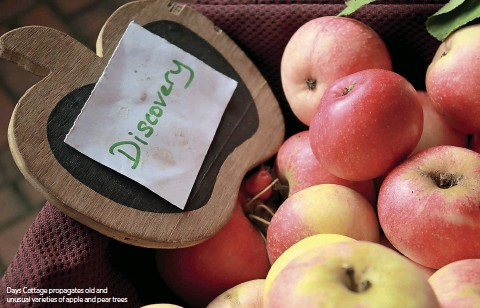 ??  ?? Days Cottage propagates old and unusual varieties of apple and pear trees