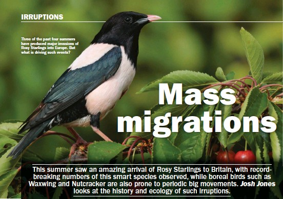 ??  ?? Three of the past four summers have produced major invasions of Rosy Starlings into Europe. But what is driving such events?