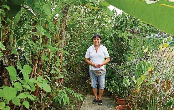 ?? — Photos: ST ?? Chua on her plot of land where she has planted a large variety of herbs, plants, and fruits.